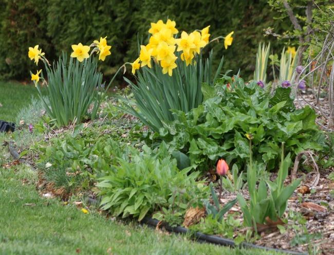 Best Bloomin Garden time again!